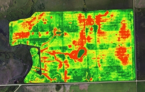 crop-mapping