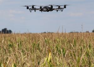 Drone over corn