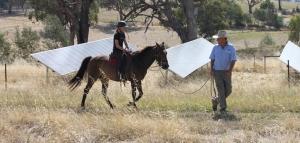 livestockslider_horse